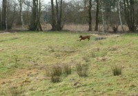 Coursing 19.02.2012