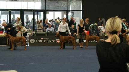 World Dog Show Salzburg Mai 2012