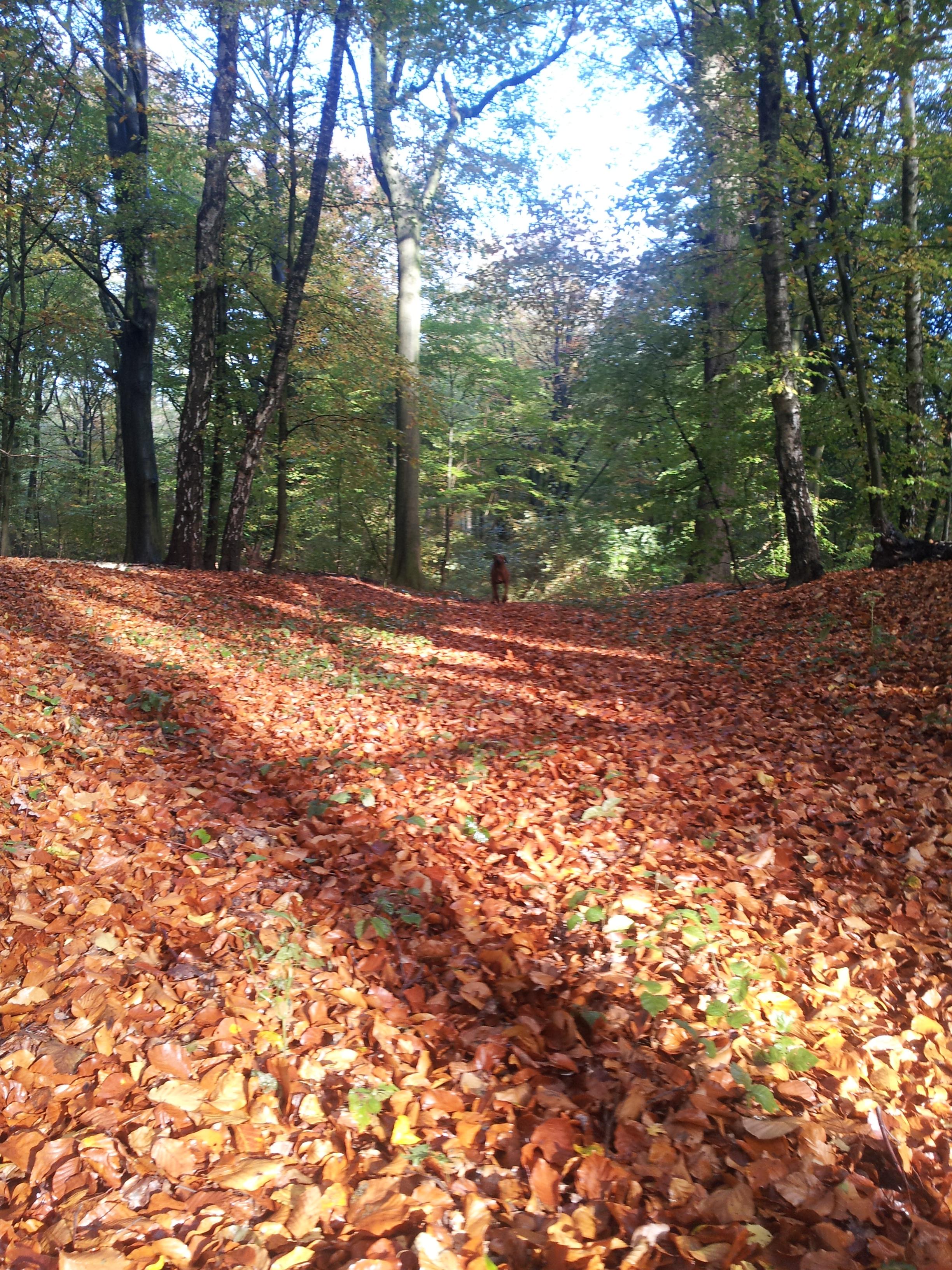 Herbstspaziergang 2012